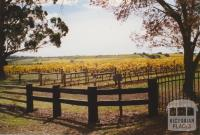 Seppelts vineyards, Drumborg, 2006