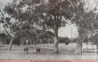 On the Warrandyte Road near Templestowe, 1942
