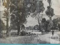Roadside scene at Taggerty, 1946