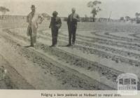 Ridging a bare paddock at Nullawil, 1945