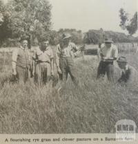 Pasture on Bamawm farm, 1946