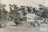 Dairy holding, Tongala, 1953