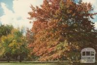 Autumn, Woodend, 1980
