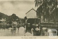 The swans, Jubilee Lake, Daylesford