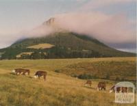 Cattle grazing in front of Mt Sturgeon, Dunkeld