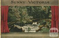 Fern scenery at Fernshaw, 1909