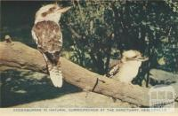 Kookaburras in natural surroundings at the Sanctuary, Healesville