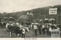 Wheat Stacks, Yarrawonga