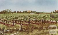Irrigated vineyard, Robinvale, 1966