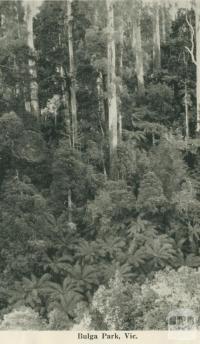 Bulga Park, 1949