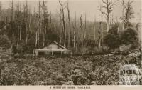 A Mountain Home, Toolangi, 1917