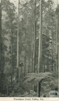 Traralgon Creek Valley