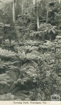 Yerrang Park, Traralgon