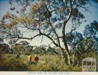 Eagles Nest on Yellow Gum Flat, Wimmera