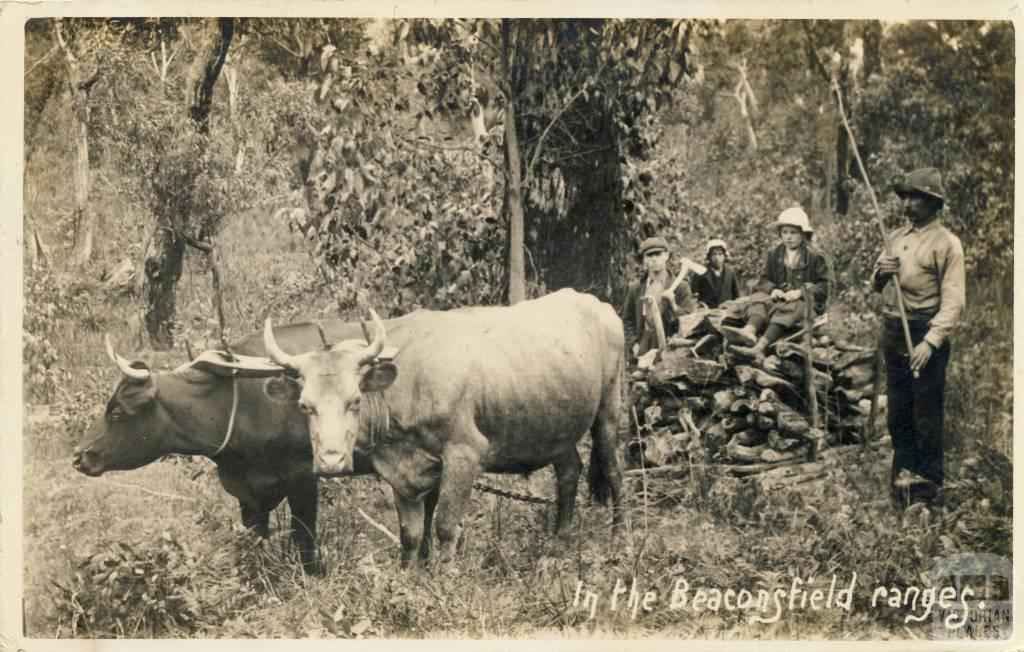 In the Beaconsfield Ranges, 1912