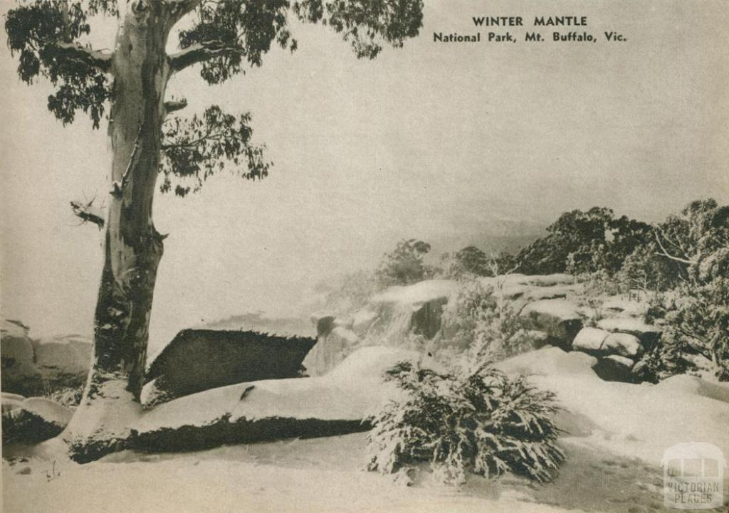 Winter mantle, National Park, Mount Buffalo, 1954