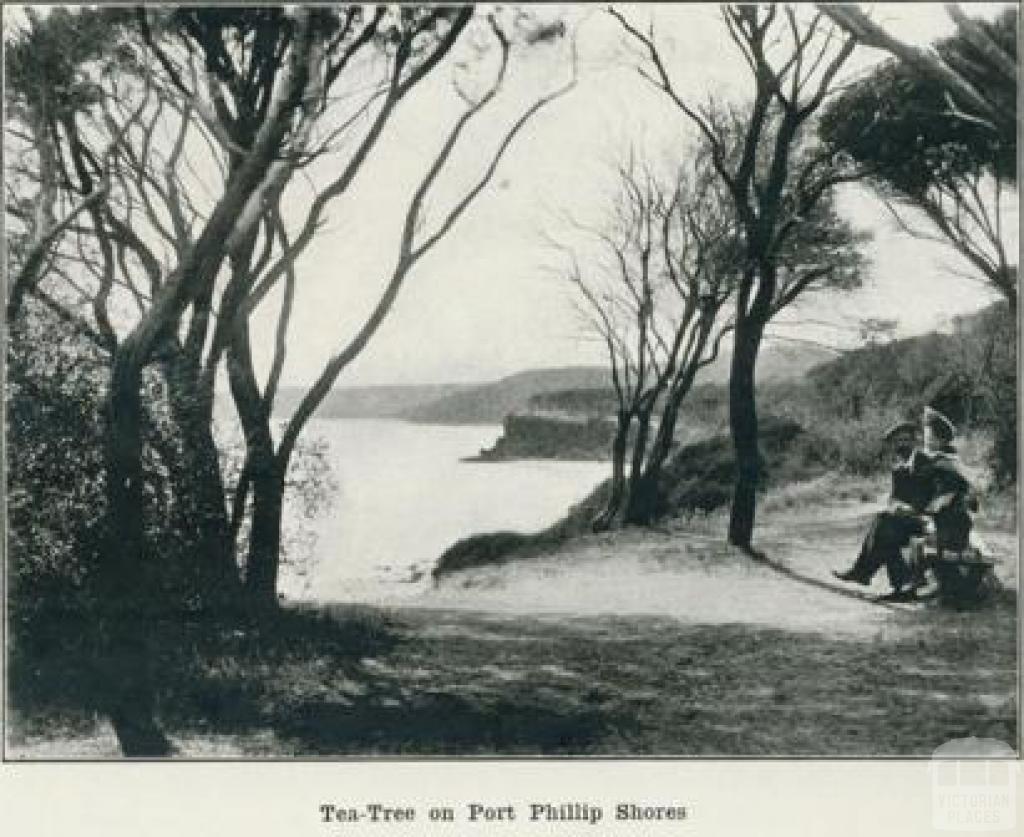 Tea-Tree on Port Phillip Shores, 1918