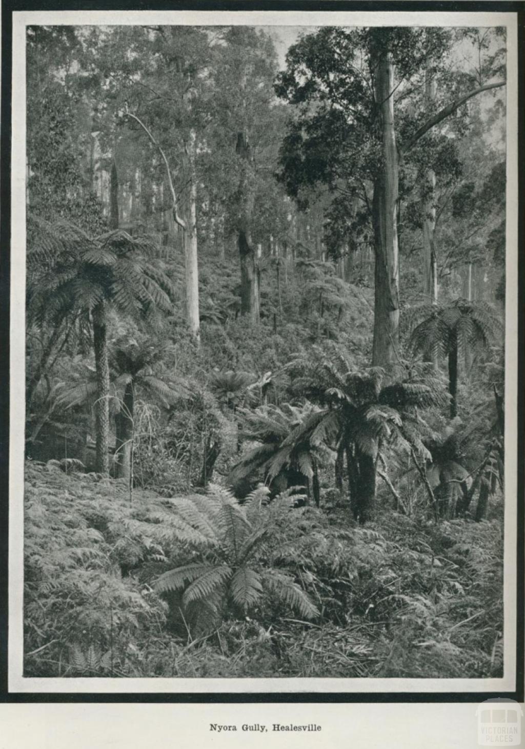 Nyora Gully, Healesville, 1918