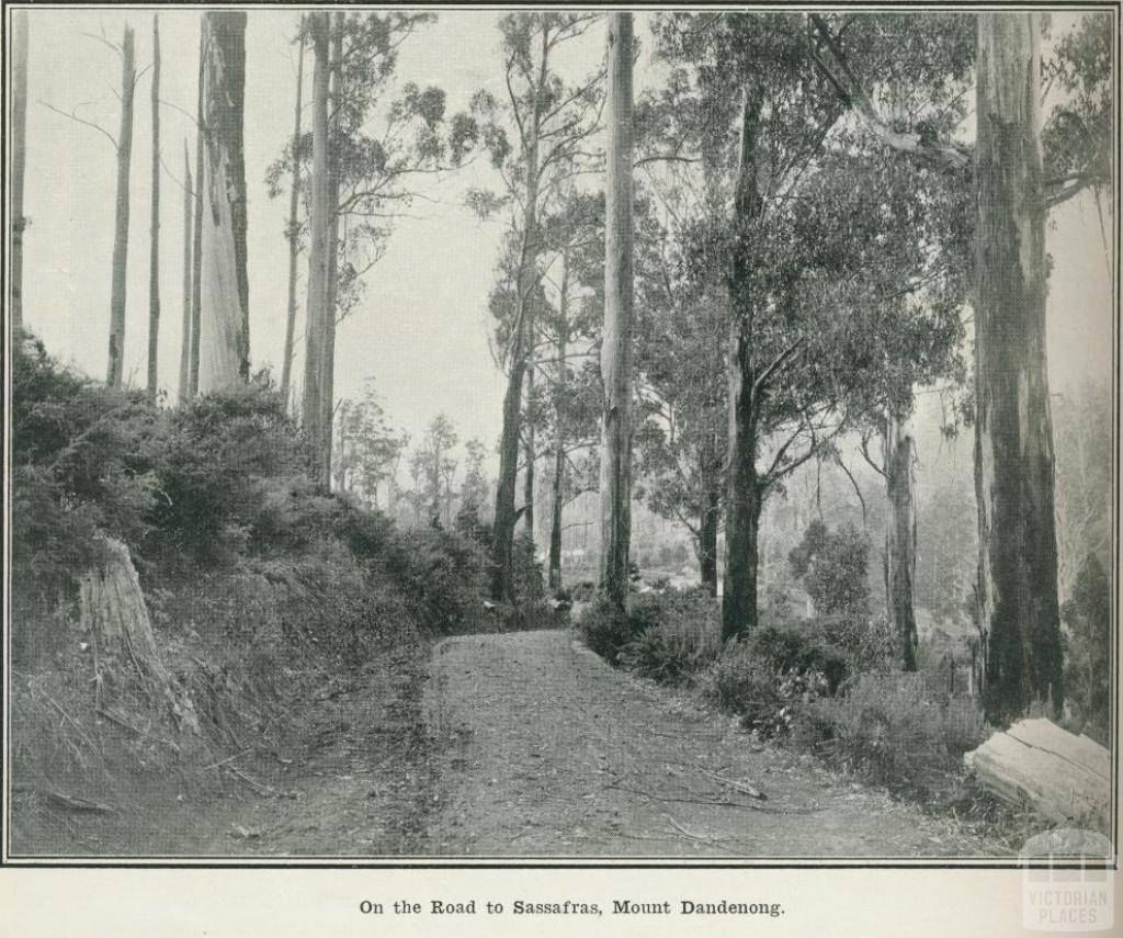 On the road to Sassafras, Mount Dandenong, 1918