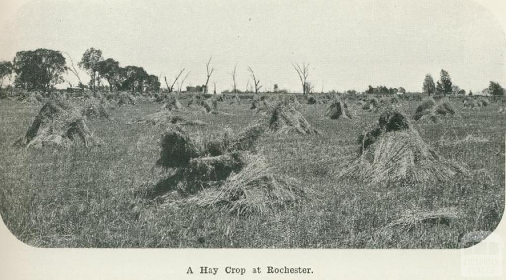 A hay crop at Rochester, 1918