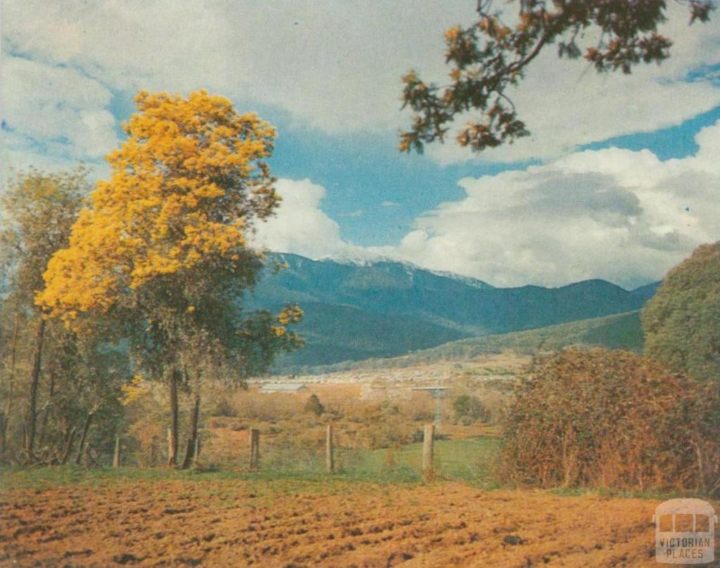 Mount Beauty township with Mount Bogong beyond