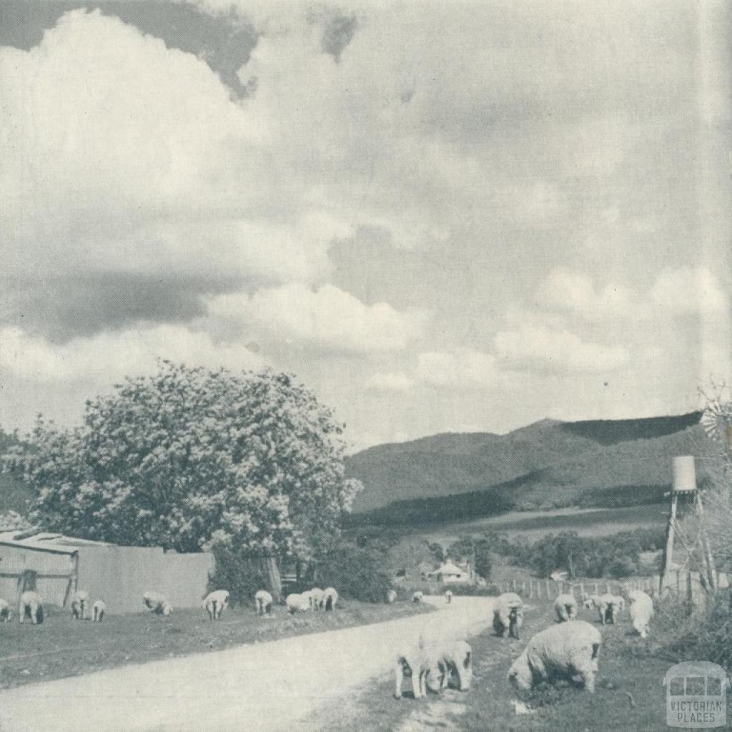 Wandiligong township, 1951