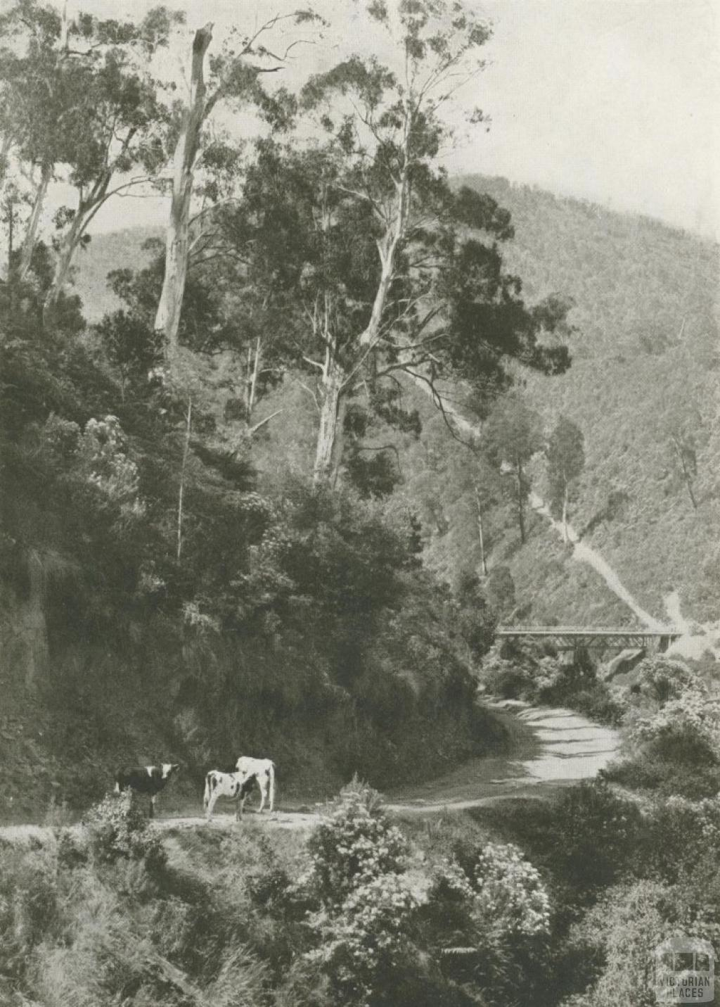 A Mountain Road, Walhalla, c1910