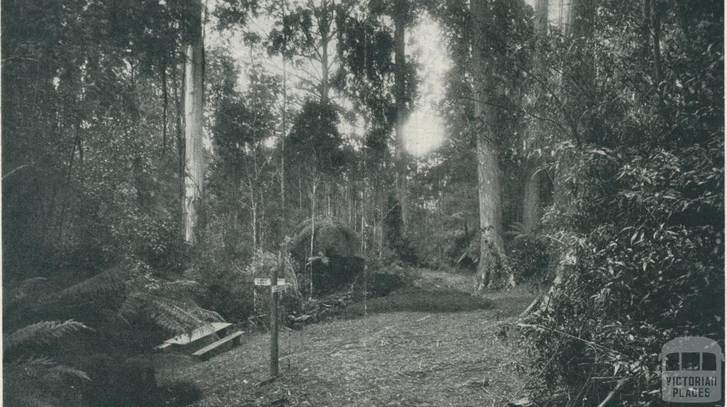 Picnic Spot, Yarram, 1933