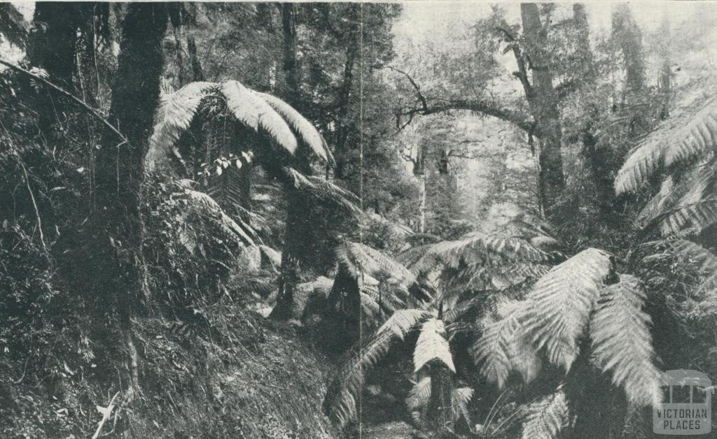 Bulga Park, Yarram, 1933