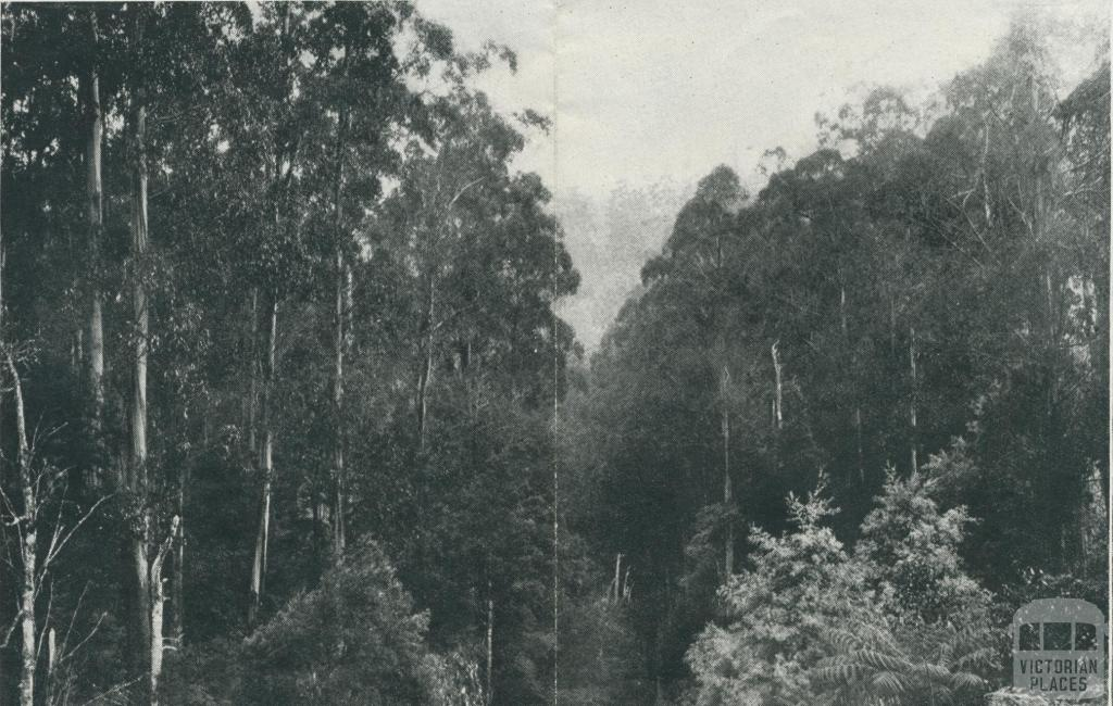 View from Balook Road, Yarram, 1933