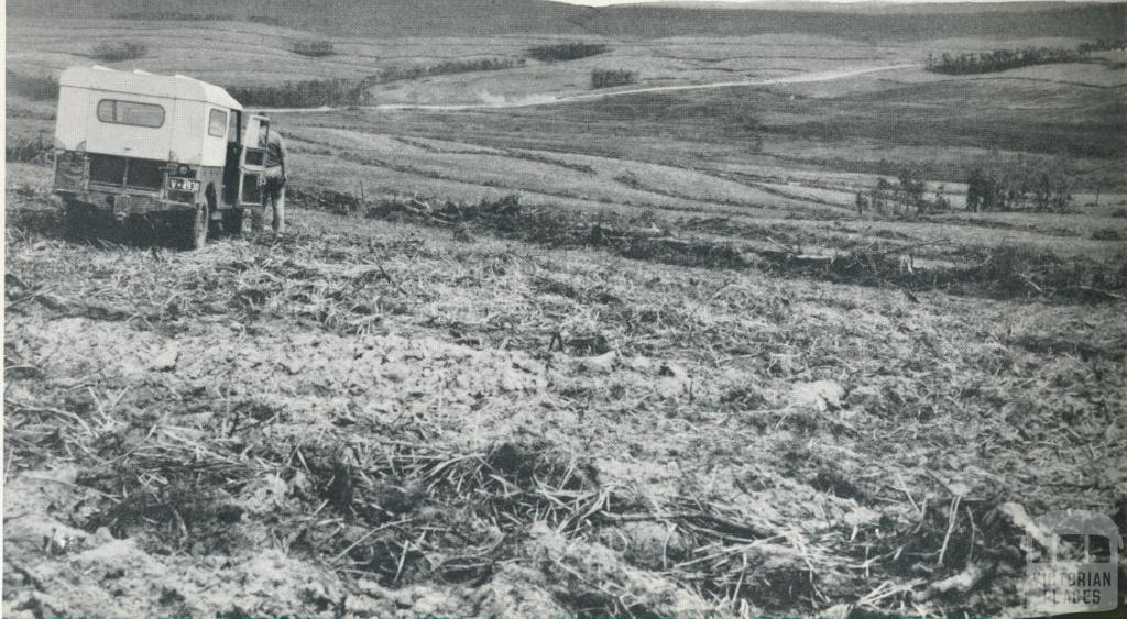 Land clearing for development, Heytesbury, 1958