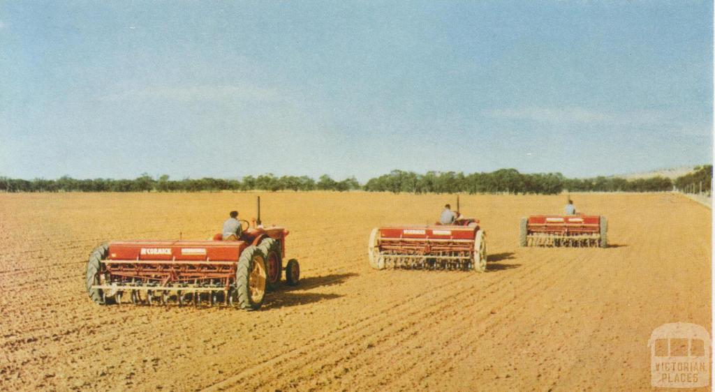 Sowing a wheat crop, Warracknabeal, 1958