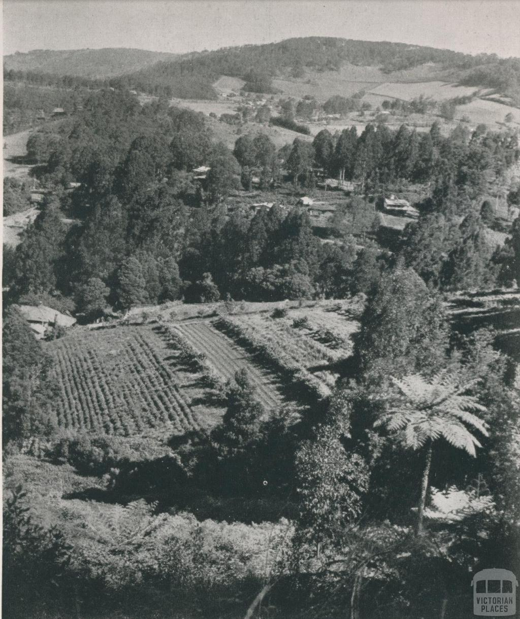 Overlooking The Patch, 1955