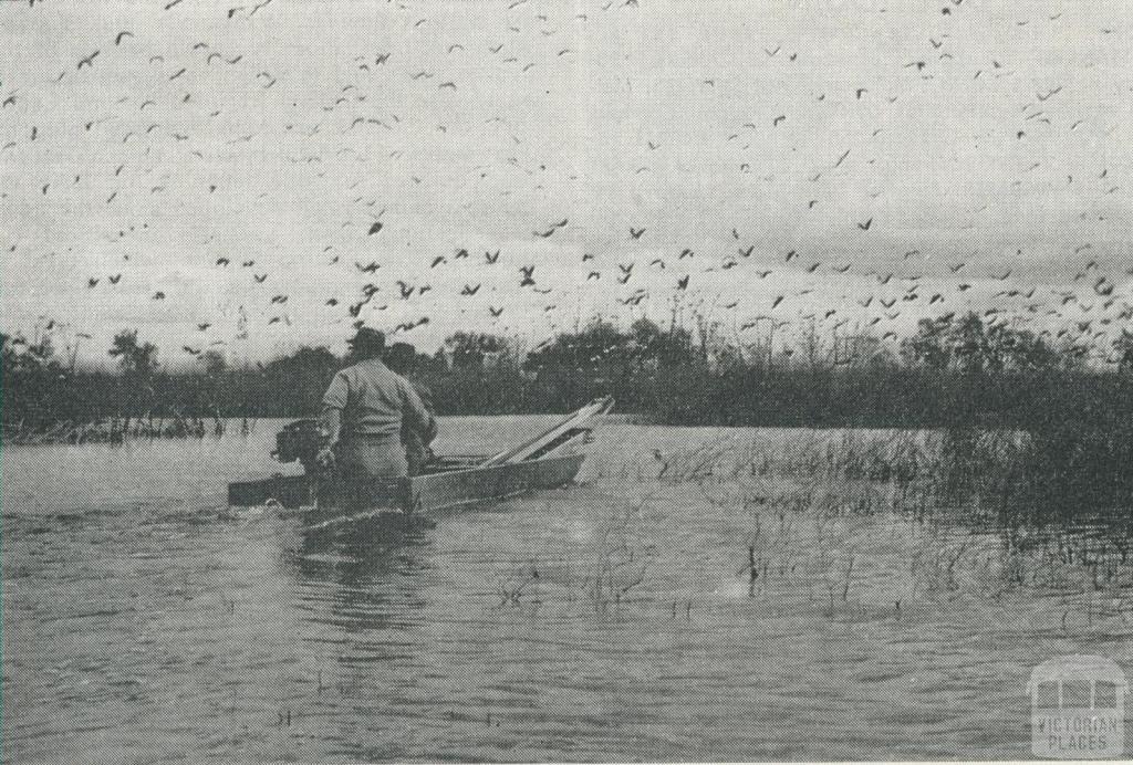 Ibis at Reedy Lake, Kerang, 1965
