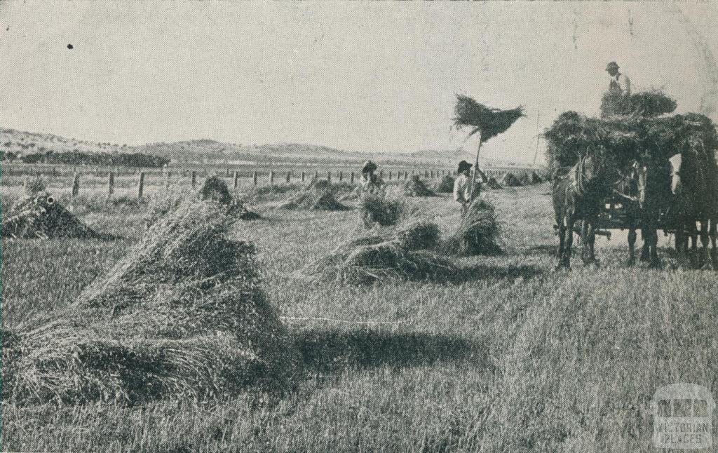 Carting in the crop, Colbinabbin, 1911