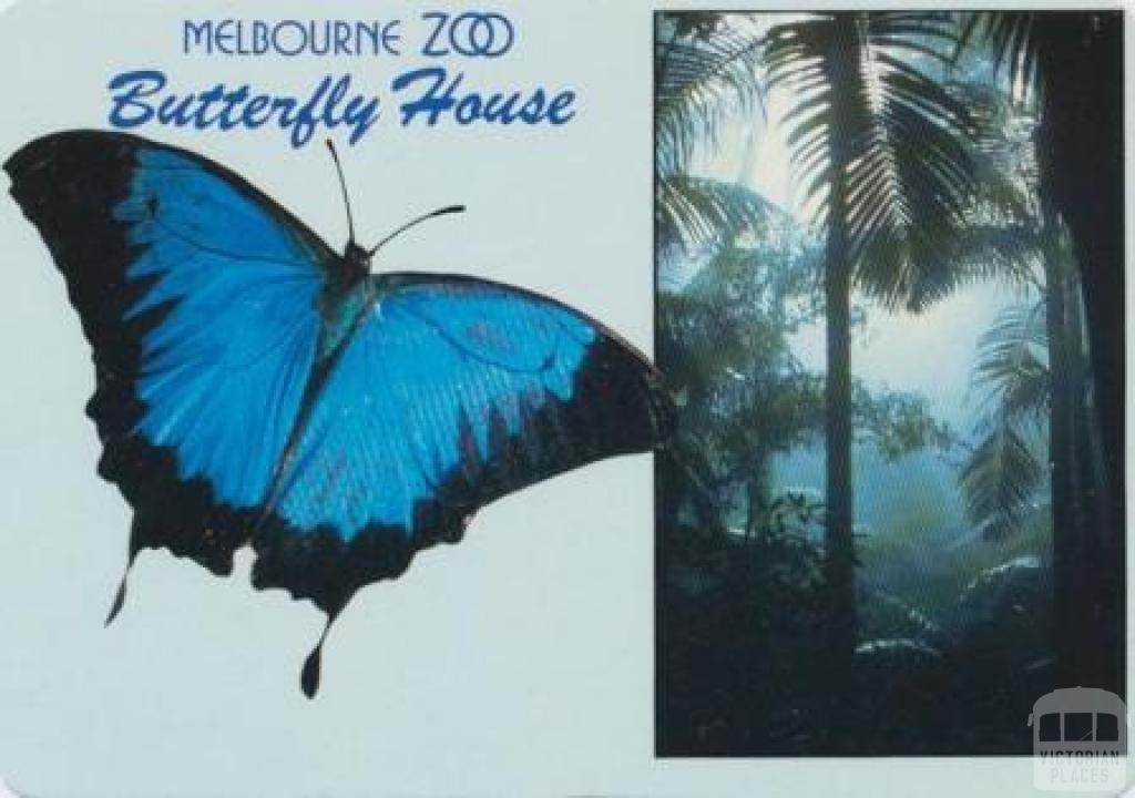 Melbourne Zoo, the beautiful Ulysses Butterfly