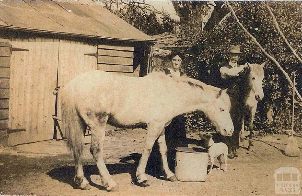Back yard and buggy shed, farmyard, Sale, 1908