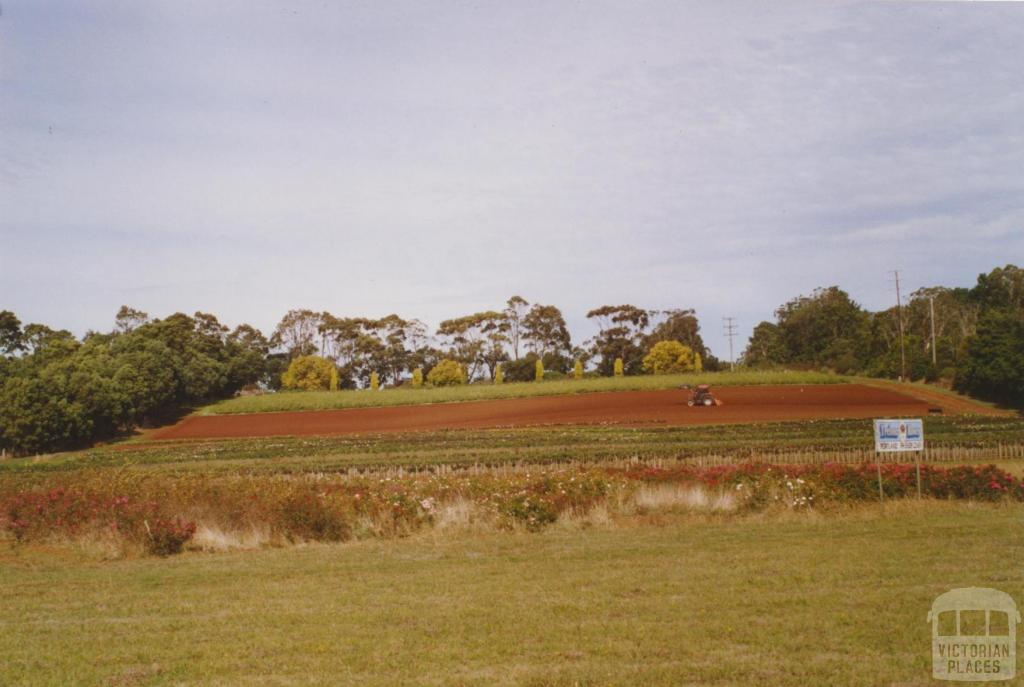 Bolwarra (Western District) flower farm, 2006