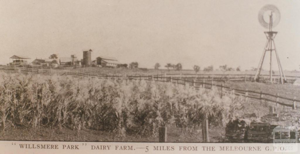 Willsmere Park dairy farm, Kew, 1910