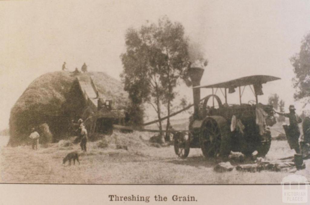 Threshing grain, Werribee, State Farm, 1916