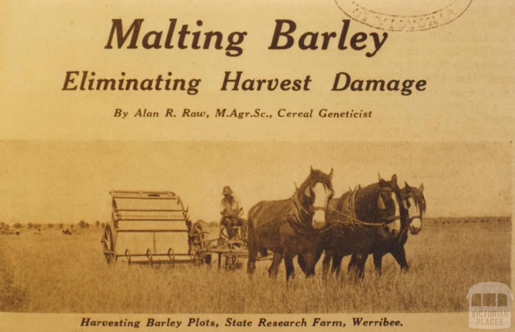 Harvesting barley plots, State Research Farm, Werribee, 1934