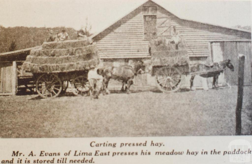 Carting pressed hay, Lima East, 1935