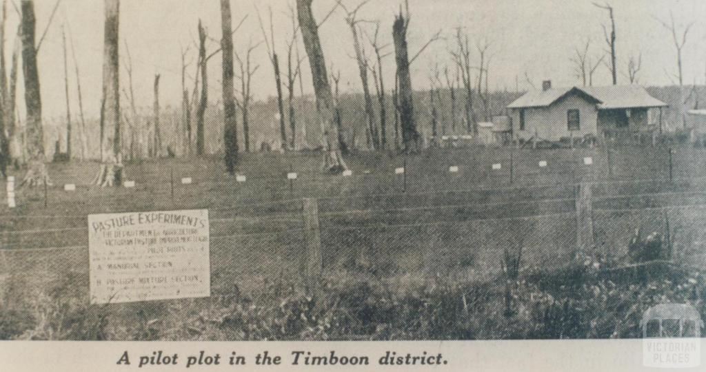 Pilot plot, Timboon district, 1936