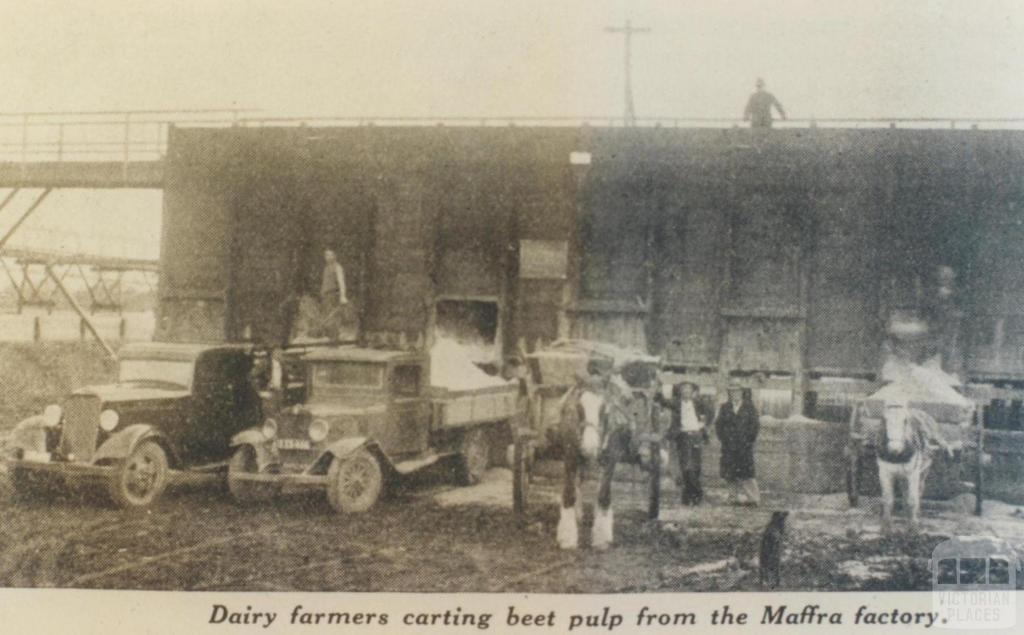 Carting beet pulp from Maffra factory, 1936