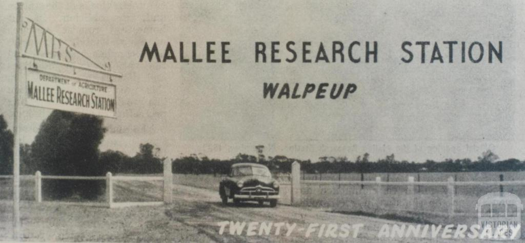 Mallee Research Station, Walpeup, 1953