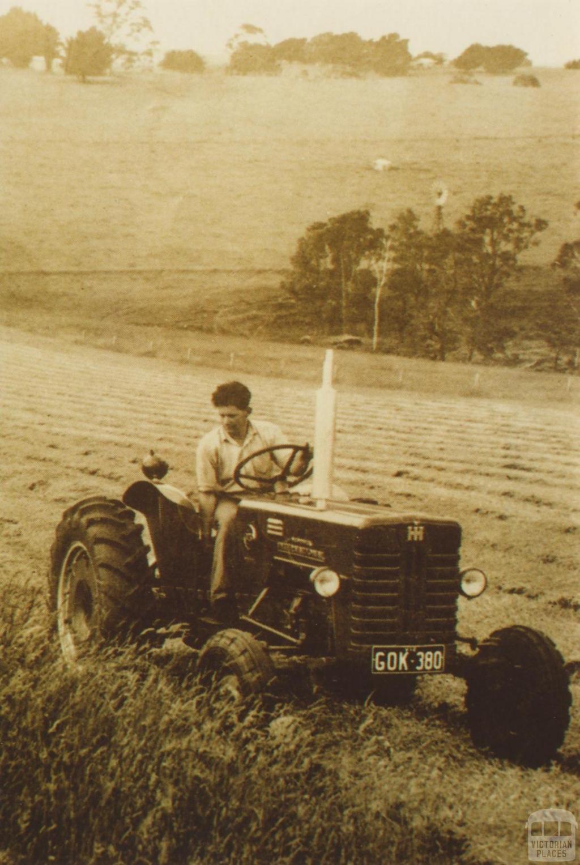 Mowing pasture, Bona Vista, Nilma near Warragul, 1958