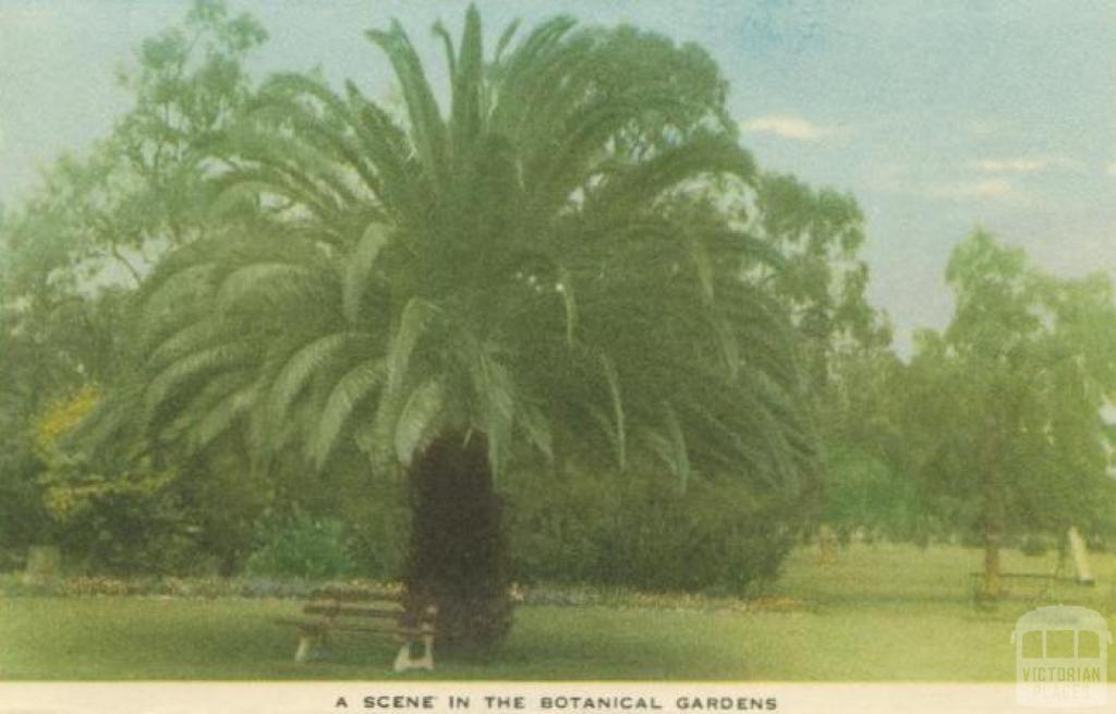 A scene in the Botanical Gardens, Horsham, 1951