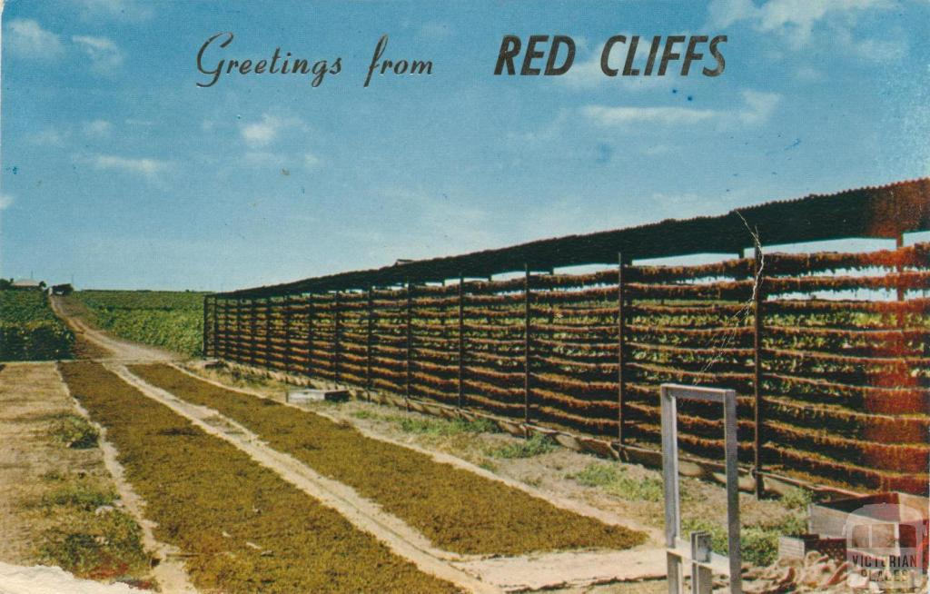 Drying Sultanas, Red Cliffs