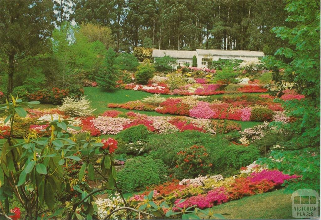 National Rhododendron Garden, Olinda