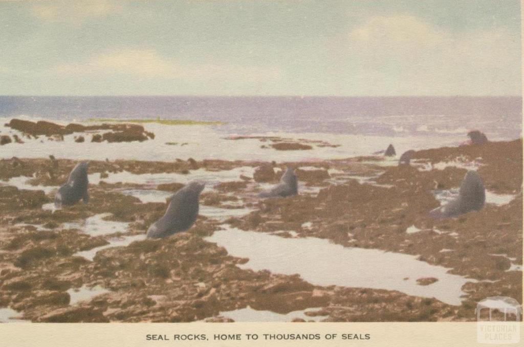 Seal Rocks, Phillip Island